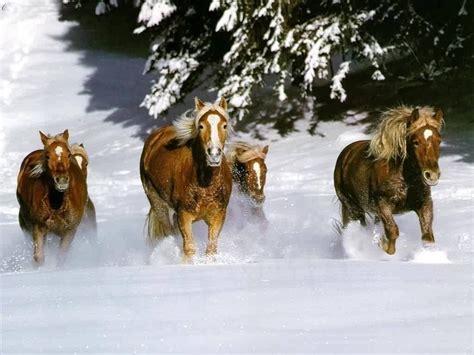 wallpaper for desktop running horse animals zoo park brown running horses wallpapers brown