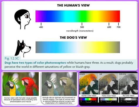 colors cats can see pets are not color blind cats dogs parrots can