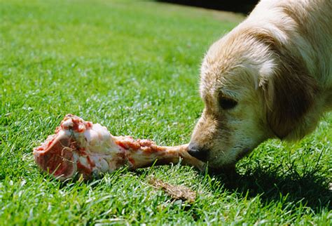 can dogs chicken bones 25 foods your should never eat