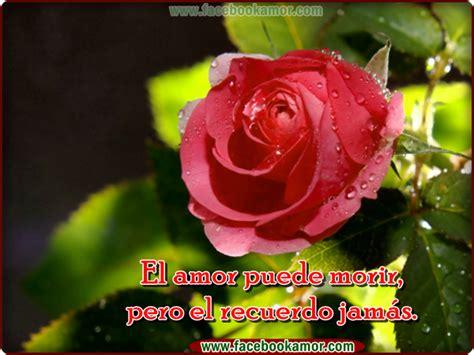 imagenes de flores bonitas para facebook image gallery hermosas flores facebook