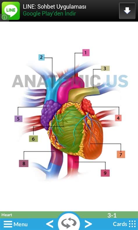 printable flash cards anatomy anatomy flash cards android apps games on brothersoft com