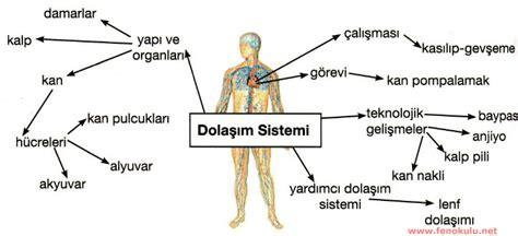 Poster Sistem Endokrin t 252 rkiye yi 246 ld 252 ren 40 pazar raporu