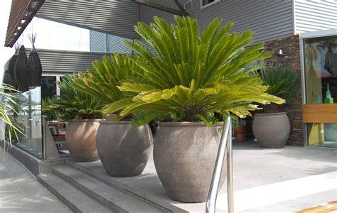 garden pots glazed terracotta wholesale victoria