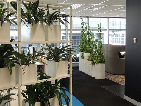 indoor plant hire office plant hire sydney green design
