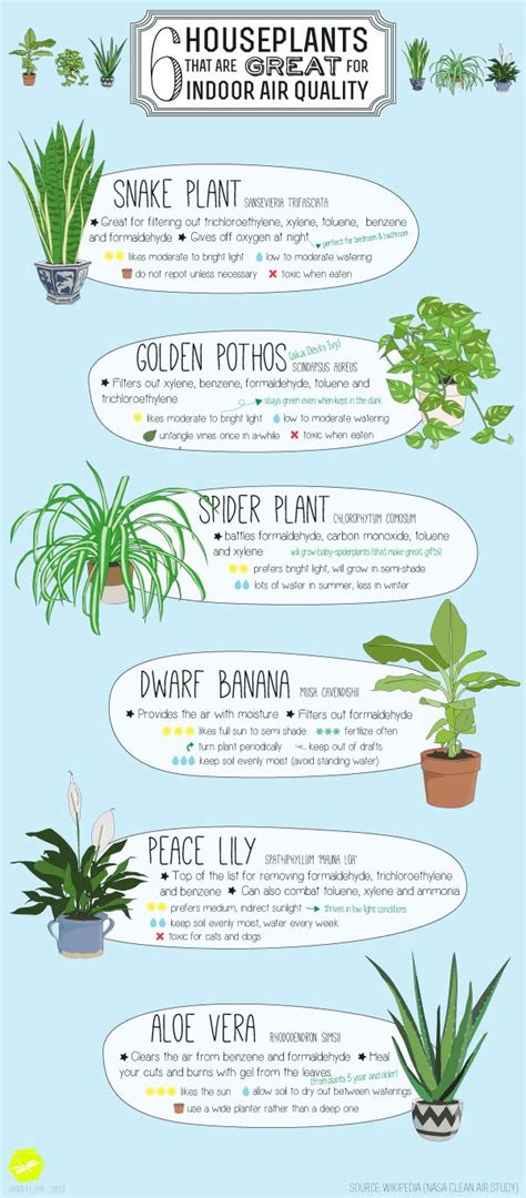 best plants for apartment air quality 6 houseplants that are great for indoor air quality