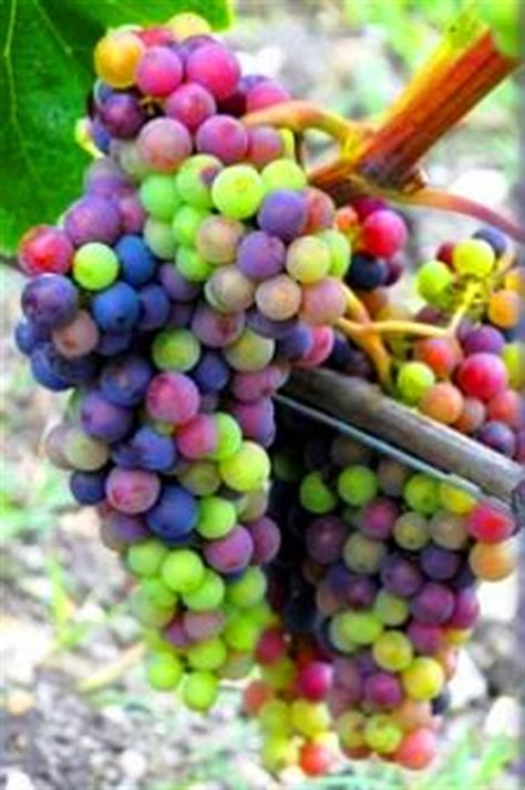 Vintners Wine Cellar - wine grape guide flavor character food pairing tips for red white wine