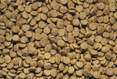 puppy food cavalierhealth org