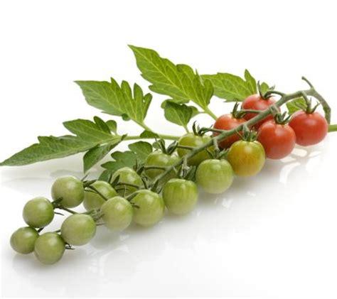 gemüse pflanzen wann pixwords das bild mit obst gem 195 188 se tomaten tomaten