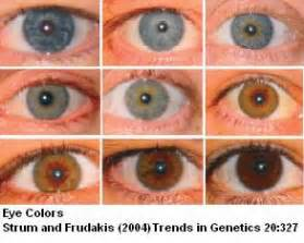 eye color determination sandwalk the genetics of eye color