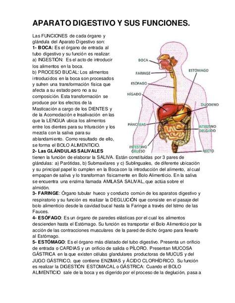 el sistema digestivo y sus organos el cuerpo humano aparato digestivo y sus funciones