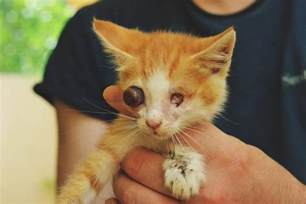 Blind Cat Adoption Blind Cats Can They Have A Normal Life Theorphanpet