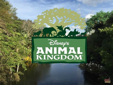 renovation kingdom instagram why disney s animal kingdom is the best and not of all