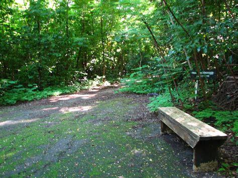 el bosque de morogoro bosque san patricio zeepuertorico com