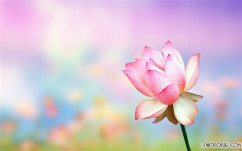 flower wallpaper moving animated flowers wallpapers wallpapersafari
