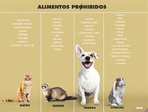 alimentos mascotas alimentos que no debes darle a tu mascota mak 237 a