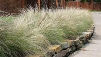 best 5 ornamental grasses for texas landscapes