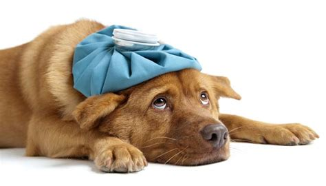 puppy illnesses best illness symptom checker top tips