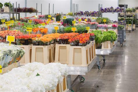 grossista fiori la storia di lombarda flor il grossista di fiori di