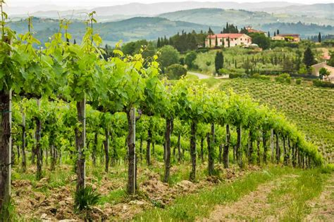 Tuscan Winemaking Lesson   Winemaker for a Day   Italy's Best