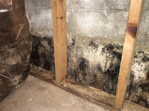 basement mold cleaning top mistakes to avoid when cleaning mold comprehensive