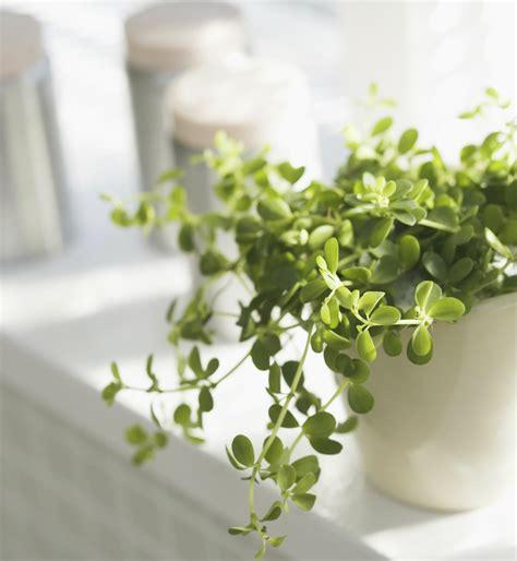 easy care indoor plants diy desktop garden easy care indoor plants to get you