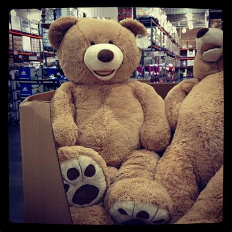 walmart big bears 7165130303 2310f03085 z jpg