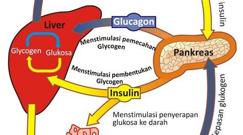 Alat Cek Dan Analisa Fungsi Paru Qrma Mini bagaimana cara mengecek insulin dalam fungsi pankreas dengan menggunakan qrma bio quantum ahmad