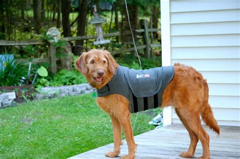 calming vest for dogs anti anxiety vest for dogs