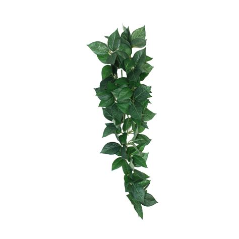 houseplant vine vines plants png images