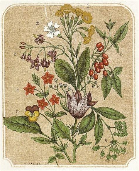 vintage flowers illustration public domain images