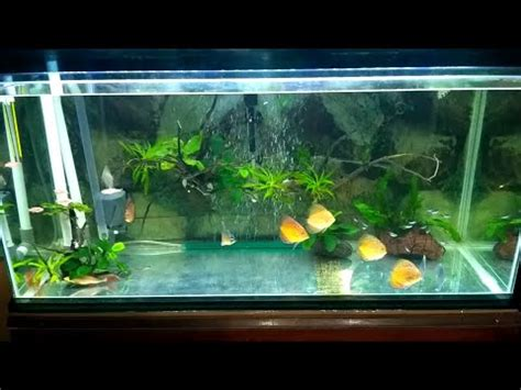 aquascape tanpa filter update akuarium tanpa ganti air kuras