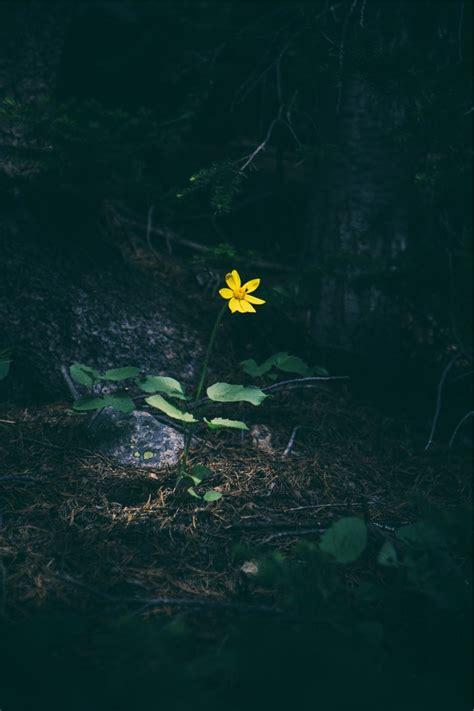 imagenes de fondo tristes yellow flower forest welovesolo