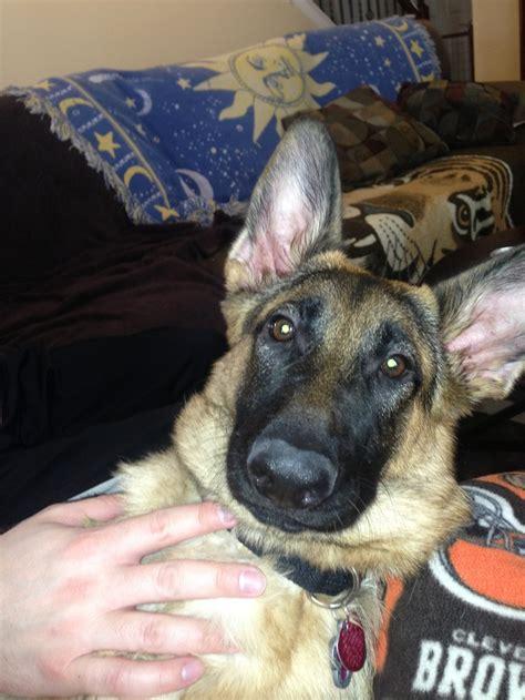 puppy sleep schedule 13 best images about puppy luca on nap times puppys and sleep schedule