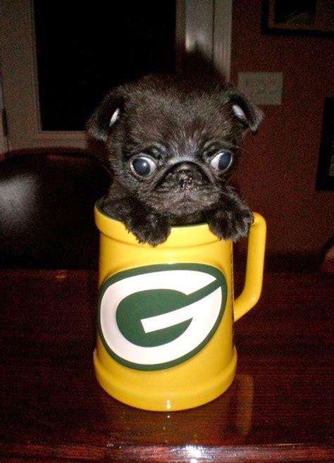 mugs of pugs pug in a mug teh