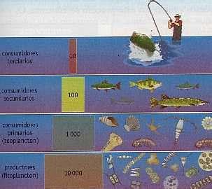 cadena trofica acuatica productores ecosistema