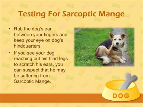 types of mange in dogs treatment for mange in dogs