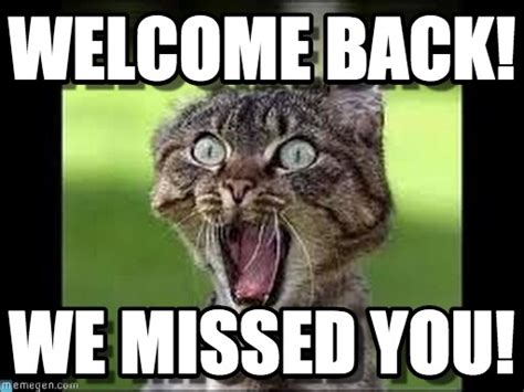 Welcome Back Meme - welcome back cat meme on memegen