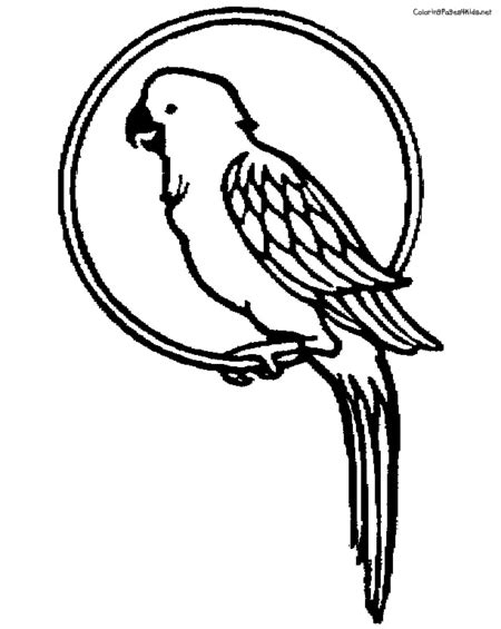 parrot bird coloring pages for kids gt gt disney coloring pages