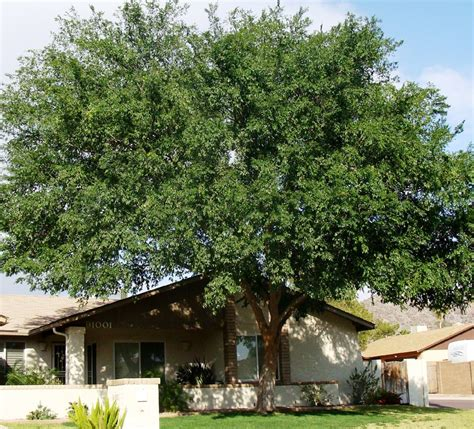 Best Shade Tree For Backyard by 8 Tips To Keeping It Cool Around Your House Gawin