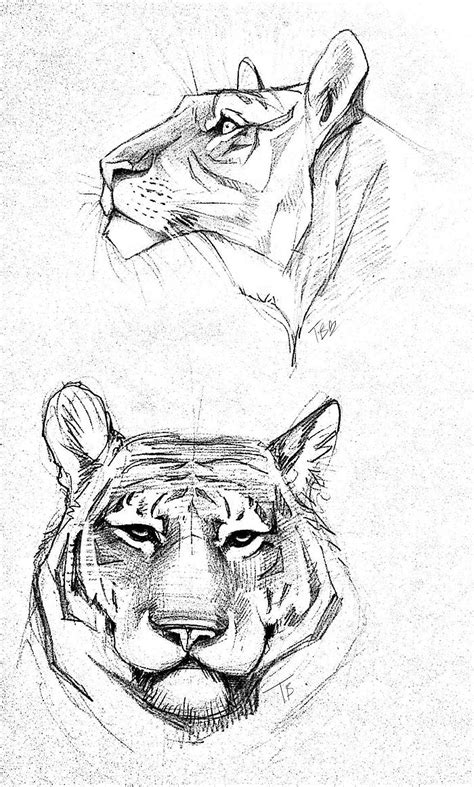how to draw a doodle tiger 25 best ideas about animal sketches on animal