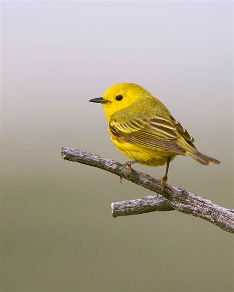 how human activities are killing birds in canada healthy