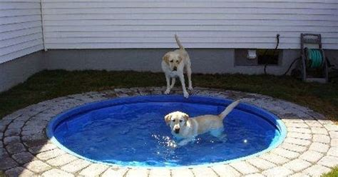 Planschbecken Kunststoff Hund by Pond Place A Plastic Kiddie Pool In The Ground It D