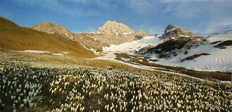sentiero dei fiori orobie sentiero dei fiori alpe arera oltre il colle valle