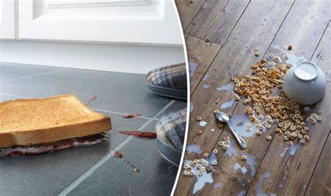 10 second rule food floor the five second rule scientist reveals if you can eat