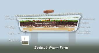 bathtub aquaponics