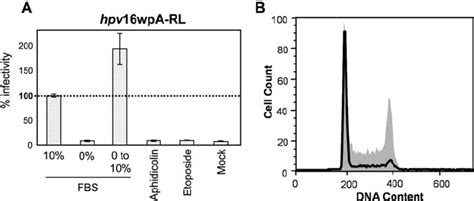 Serum Hpv cell cycle arrest by serum starvation abrogates hpv