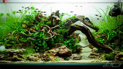 Freshwater Aquascaping by Interesting Driftwood Aquarium Aquascape