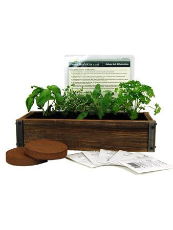 Parsley Mini Garden Kit reclaimed barnwood planter box mini herb garden kit grow