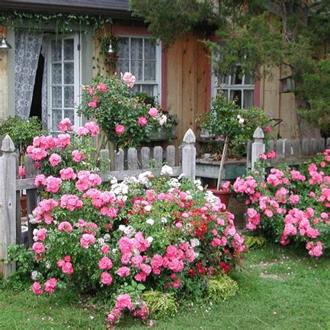 Creating An Easy Care Cottage Garden Your Easy Garden Flowers For A Cottage Garden