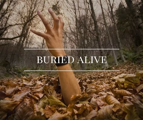 buried alive buried alive knowing the narcissist